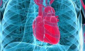 Сердечная астма – симптомы, причины, виды