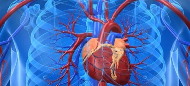 Признаки и диагностика пороков сердца