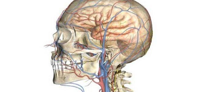 Симптомы и лечение церебральной ангиодистонии