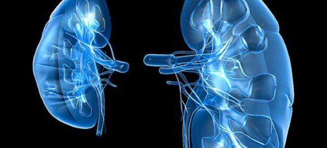 Ишемия почек: причины возникновения, симптоматика и методы лечебного воздействия