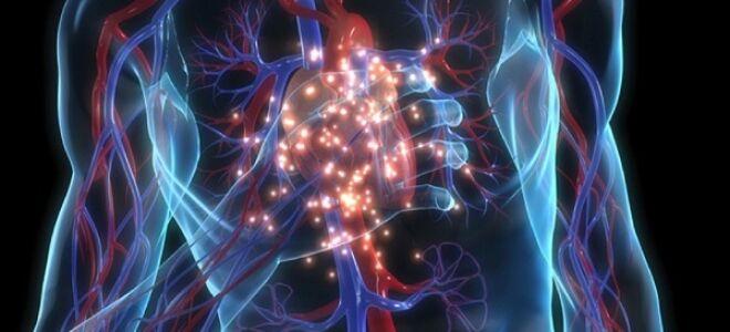 Травы от аритмии сердца