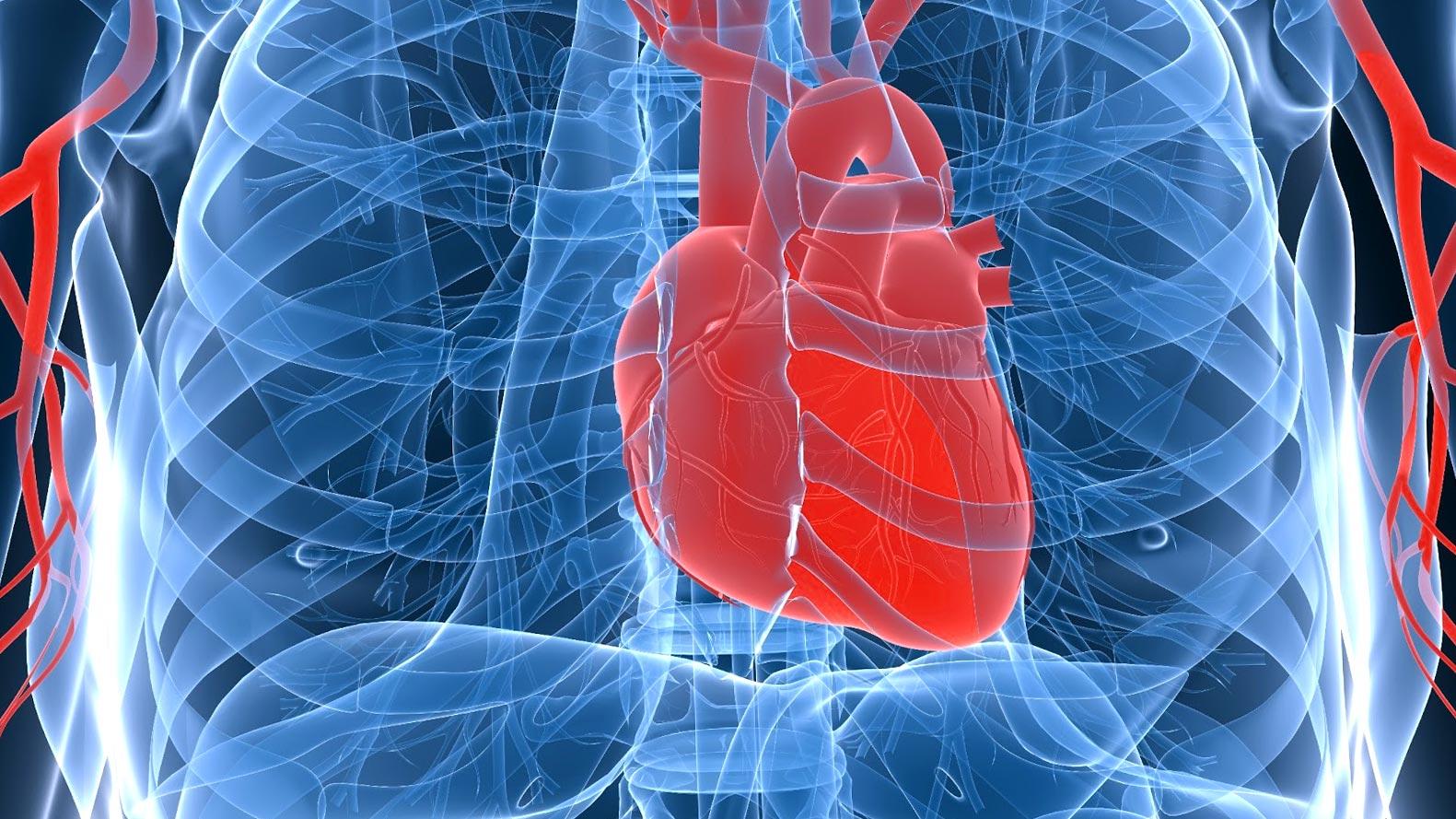 Значение сердечно сосудистых заболеваний