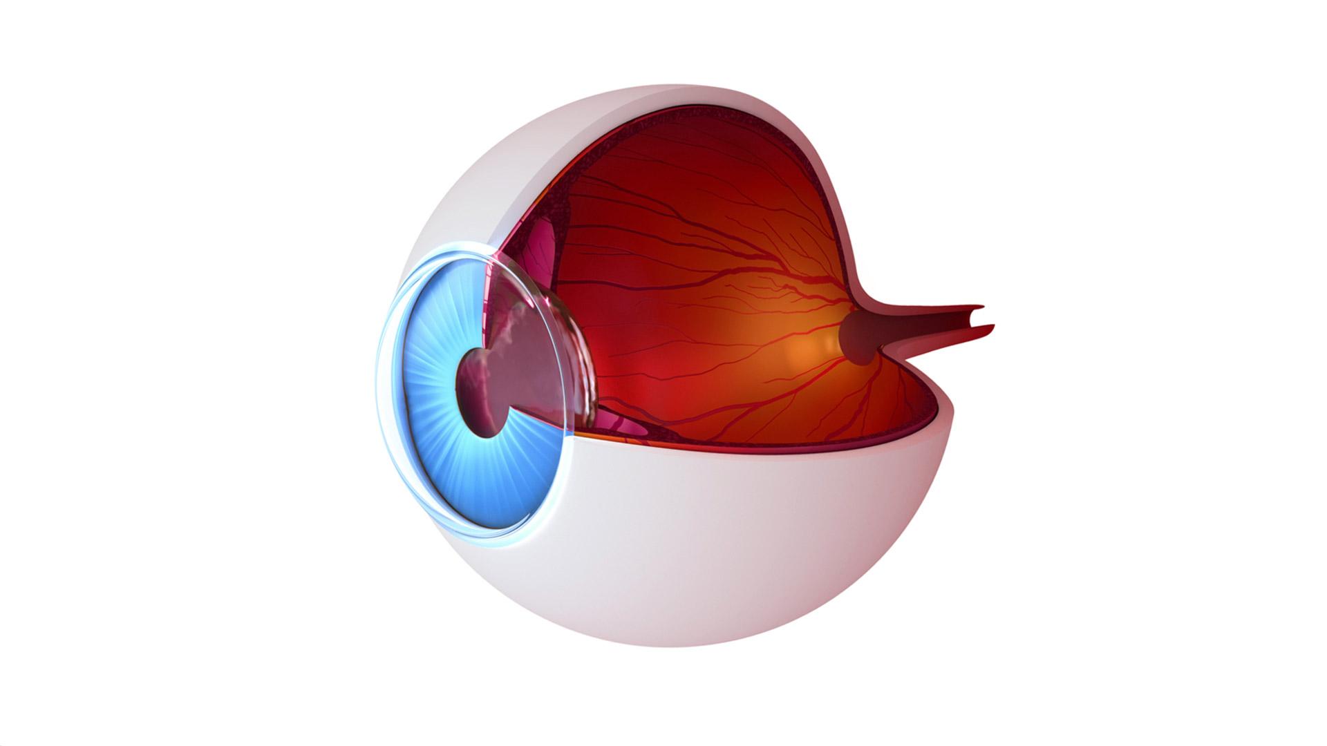 Тромбоз сетчатки возникает в артериях глаза