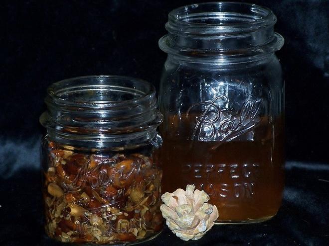 Рецепт сосновых шишек с яблочным уксусом