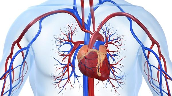 Профилактические заболевания сердечно сосудистой системы