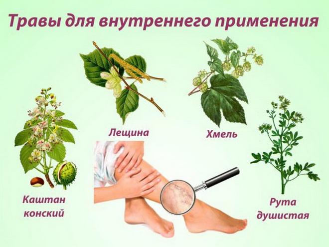 Травы от варикоза