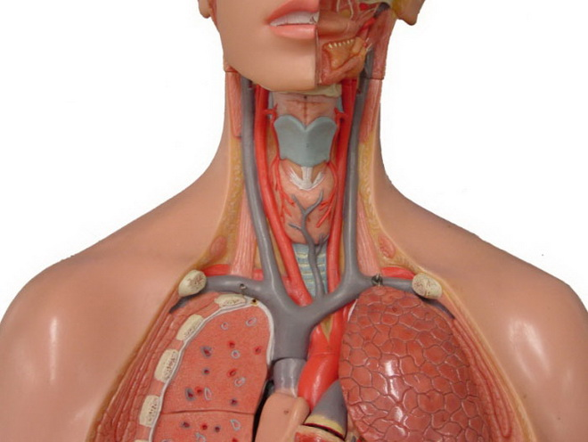 Нестенозирующий атеросклероз сонных артерий