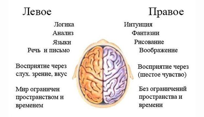 poluscharia-mozga