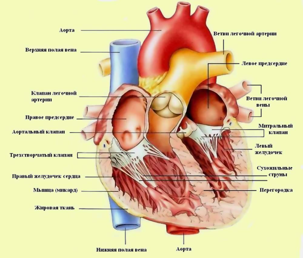 Недостаточность аортального клапана - степени, лечение