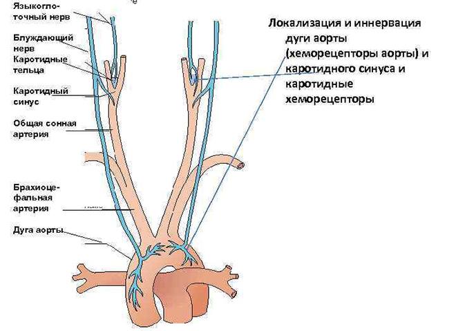 Патология блуждающего нерва