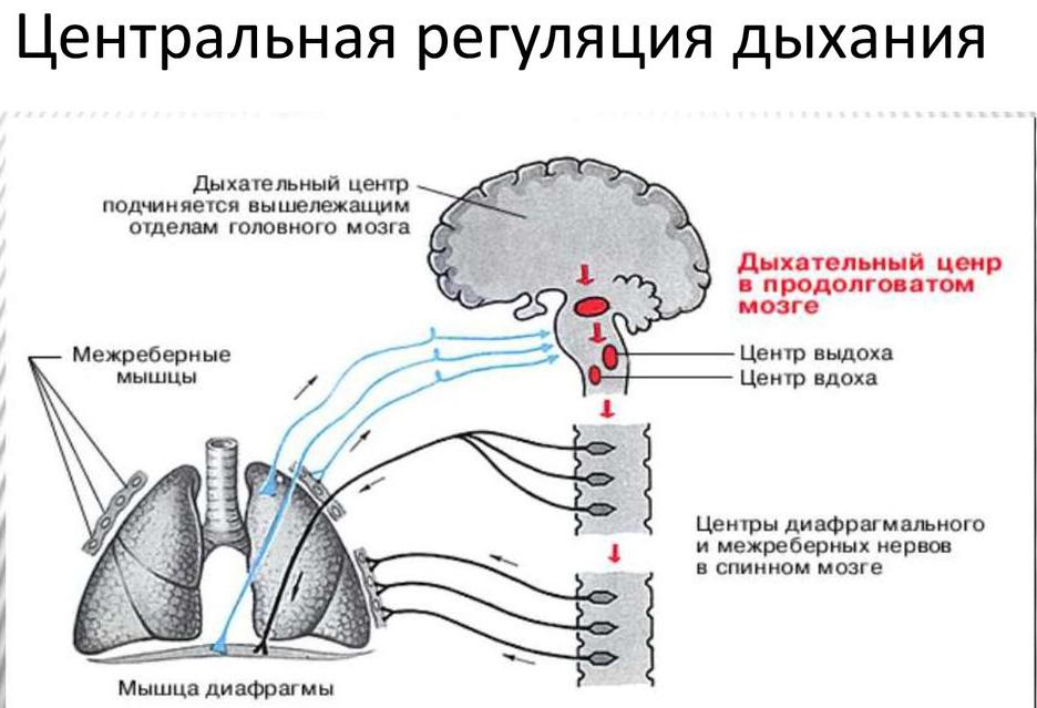 Нарушение функций дыхательного центра
