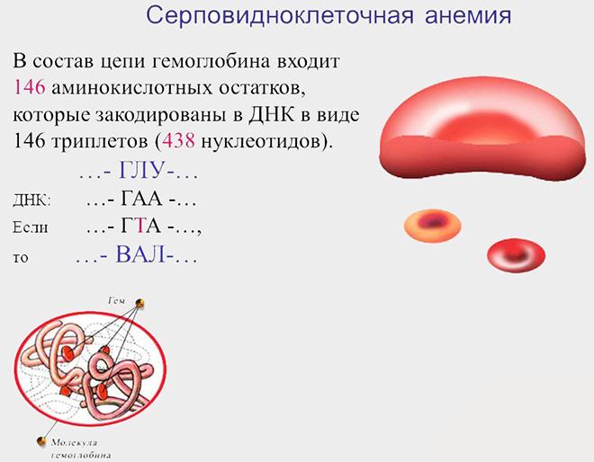 Серповидноклеточная анемия: причина развития